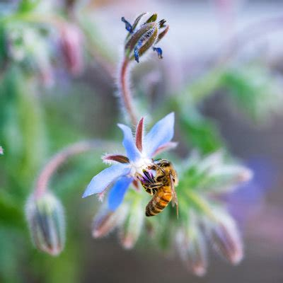 Bee Garden Flowers Best Plants Pollination Best Flowers For Bees Butterflies Sunset