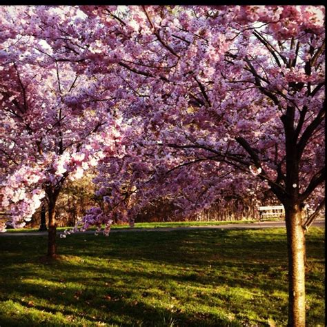 31 best springtime in new jersey images on nature floral and landscapes