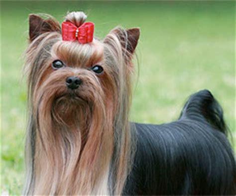 imagenes animales con pelo cuidados del pelaje del perro animal home 174
