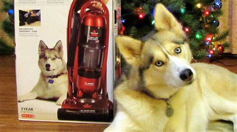 Bissell Vaccum Shelby On The Bissell Vacuum Cleaner Box Siberian Husky