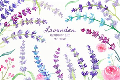 clipart illustrations watercolor lavender illustration illustrations