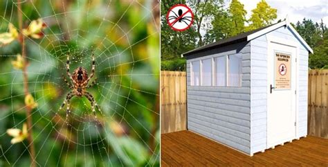 Keep Spiders Out Of Shed by Spider Proof Sheds Spider Proof