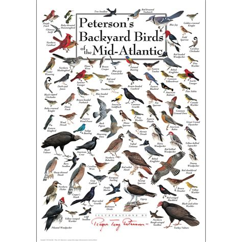 peterson backyard birds peterson s backyard birds of the mid atlantic poster