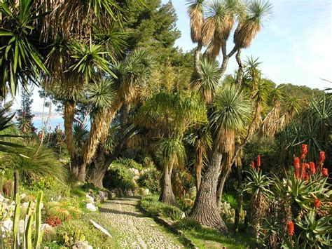 giardino botanico montecarlo il giardino a 360 176 giardini botanici hanbury