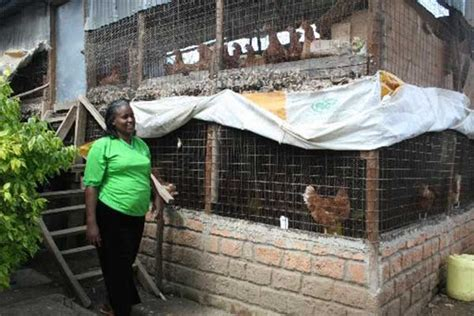 Chicken House Design And Construction In Kenya Seeds Of Gold Daily Nation