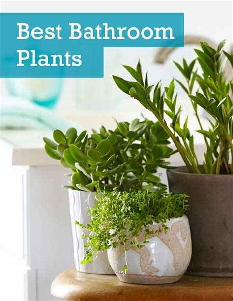indoor plants bathroom see the 6 best houseplants that can thrive in your