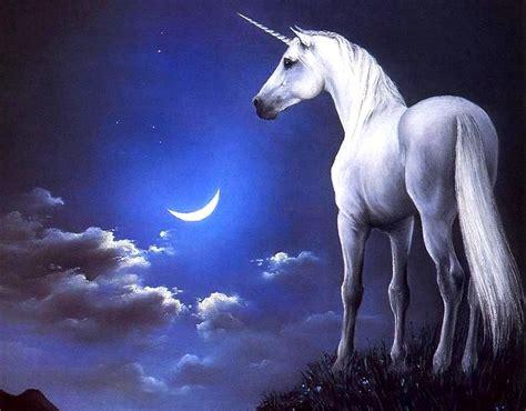 imagenes seres unicornio mist 233 rios fant 225 sticos unic 243 rnios