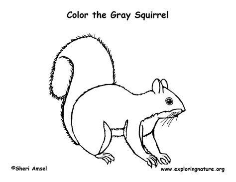 coloring page of a gray squirrel squirrel gray coloring page