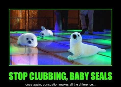 Baby Seal Meme - stop clubbing baby seals intuitive beats