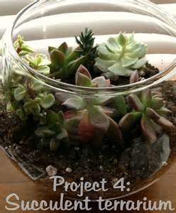 8 Inch Fish Bowl Vase 12 Projects In 2012 Open Succulent Terrarium Campfire Chic