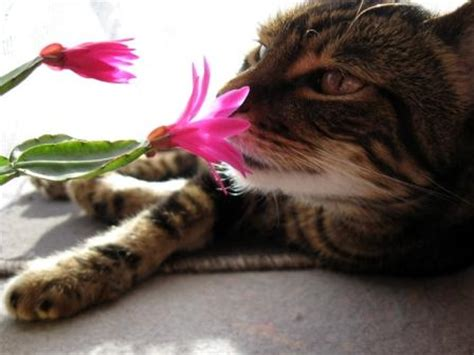 blumen gegen katzen 2824 blumen gegen katzen pflanzen gegen katzen verpiss dich