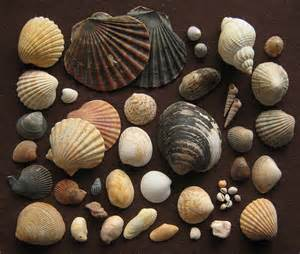 And Shell File Shell Island 1985 Jpg Wikimedia Commons