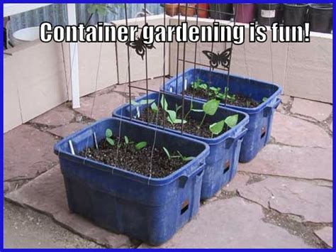 Six Container Gardening Ideas For Vegetables How Often To Water Vegetable Garden