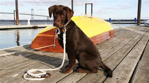 salty dog boat magazine fair lead leash is boat dog approved new england boating