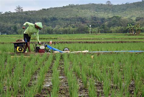 Pompa Air Mini Untuk Sawah mengangkat harkat petani