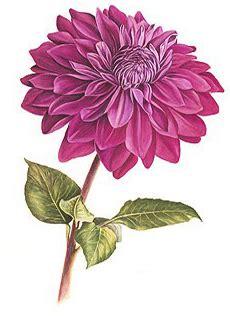 nomi di fiori femminili vivacemente il giornalino cuore e della mente nomi