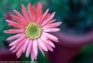 royalty free photos flowers stock licensing available sandeep bansal experiments