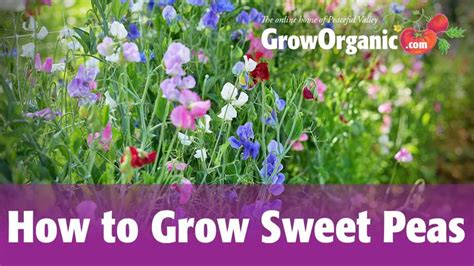 17 best images about organic gardening how tos on