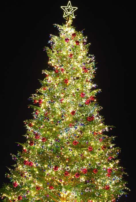 weihnachtsbaum in abu dhabi dubai news
