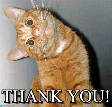 Thank You Cat Meme - thank you cat tilting head meme on memegen