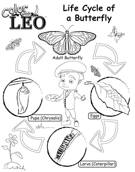 butterfly coloring page education com life cycle of butterfly coloring pages