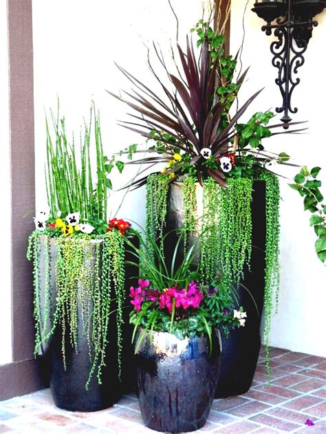 awesome home and then large plants tall houseplants to how to start a small garden archives garden trends