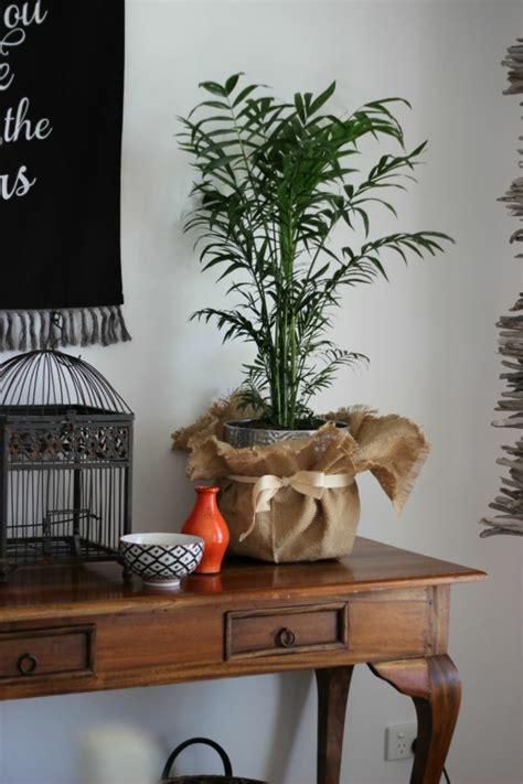 goldfruchtpalme wohnzimmer tipps f 252 r die richtige pflege der goldfruchtpalme