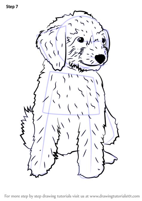 doodle draw step by step learn how to draw a mini goldendoodle dogs step by step