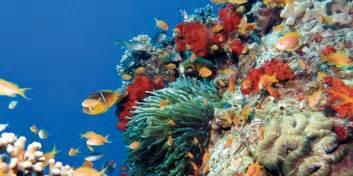 dive in aqaba scuba diving in aqaba