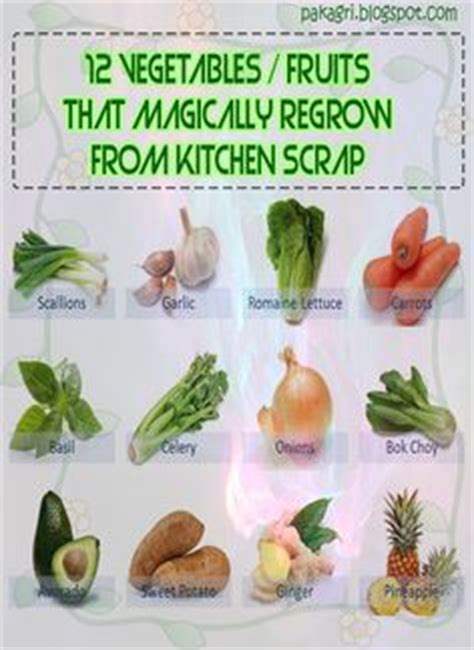 7 vegetables that easily regrow themselves 1000 images about re growing veggies organic gardening