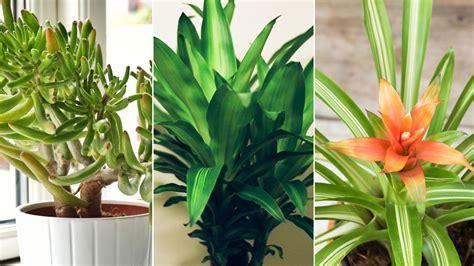 air purifying indoor plants healthcom health