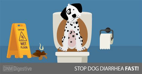 what helps dogs with diarrhea how to stop diarrhea