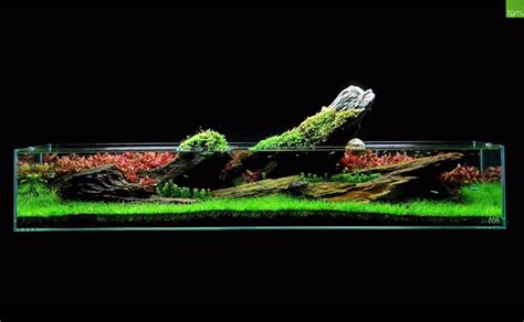 Green Machine Aquascape by The Green Machine Is A Uk Aquarium Shop Specializing In
