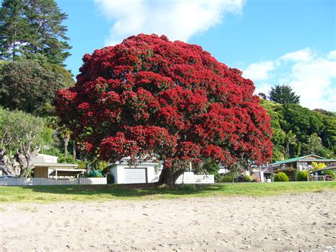 10 things i love about new zealand new zealand trees