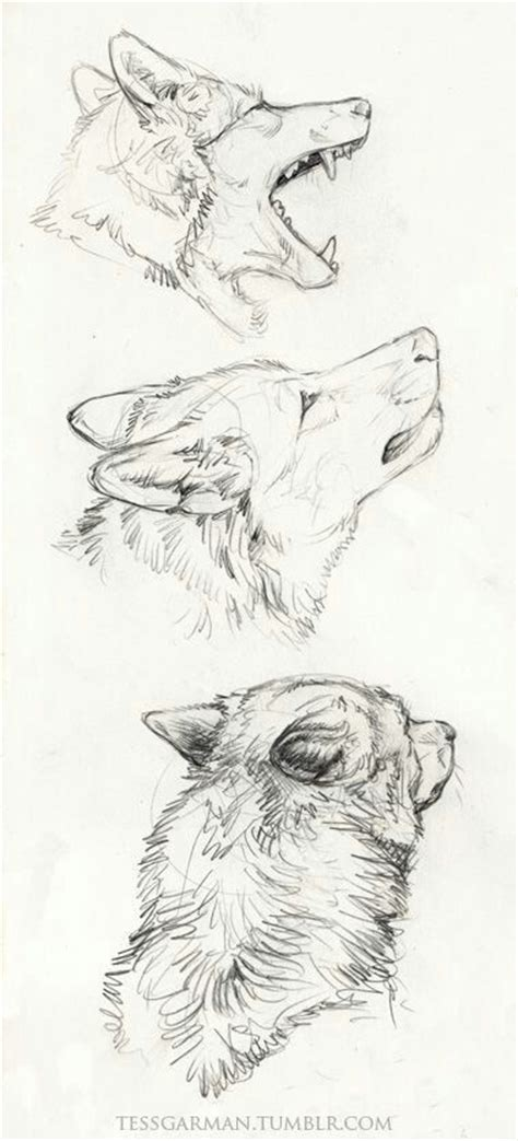 Sketches Wolf by Wolf Sketch Drawings