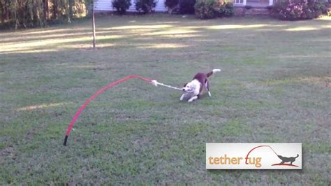 backyard toys for dogs the best dog toy ever tether tug outdoor dog toy youtube