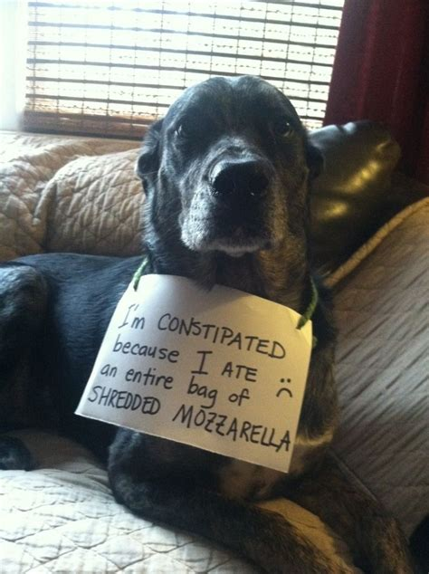 Dog Shaming Meme - pin by nancy cottle on shame shame shame pinterest