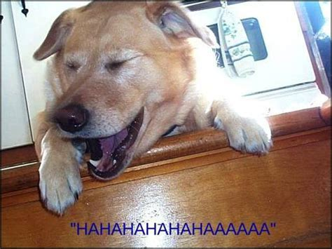 laughing puppy joke du jour thrills and delights dogs and puppies du jour