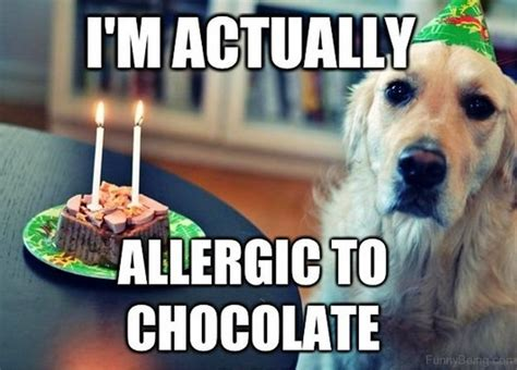 are dogs allergic to chocolate 50 memes you need to see