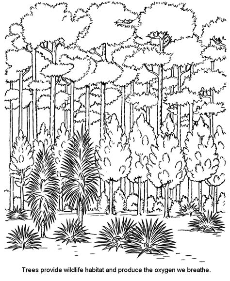 free coloring pages of temperate forest