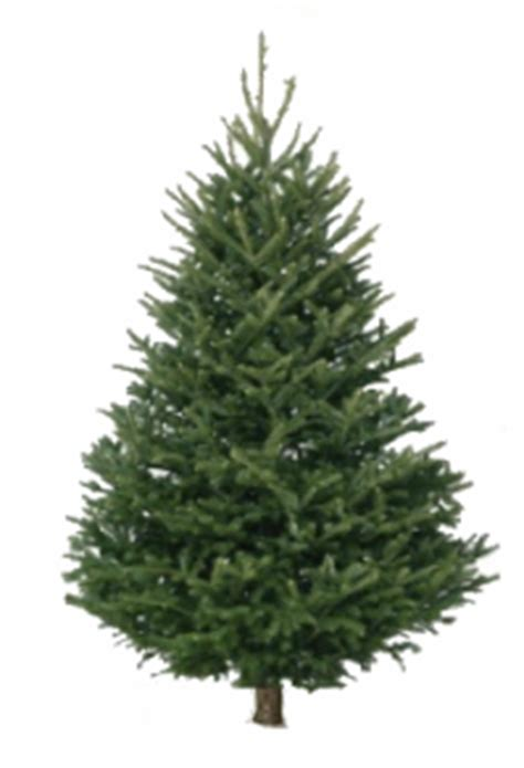 fraser fir christmas trees delivered trees echo hill farms