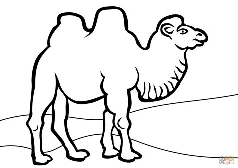 Bactrian Camel Coloring Page And Camels Coloring Pages Camels Coloring Pages
