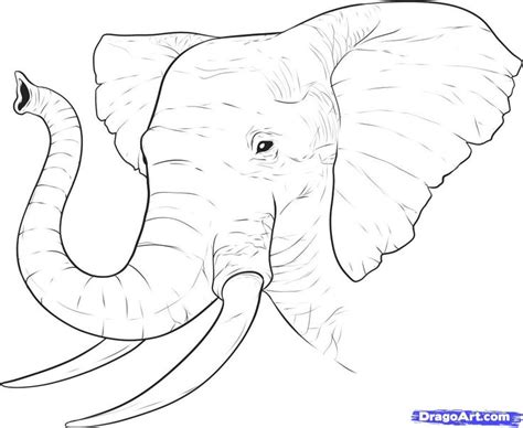african elephant outline tattoo pinterest images of 25 best tattoo outlines images on pinterest tattoo