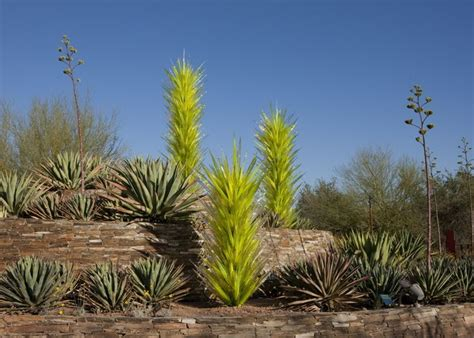 desert botanical garden chihuly 21 best images about everything chihuly on