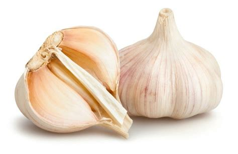 is garlic safe for dogs is garlic or bad for dogs thriftyfun