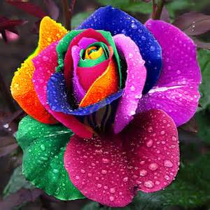 different colored roses different colored roses promotion shopping for