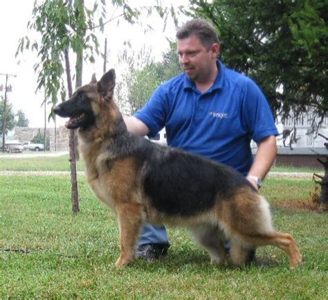 breeder indiana indiana german shepherd breeders decksscom breeds