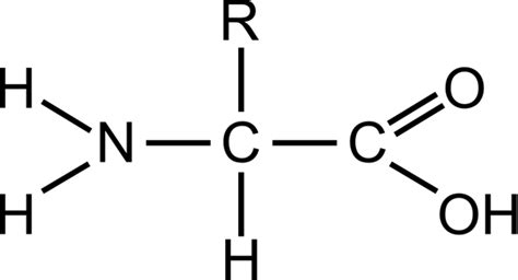diagram of amino acid how can the relationship between amino acids and proteins