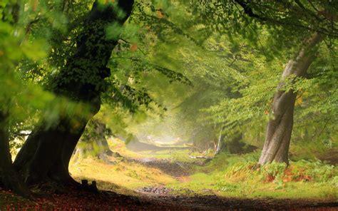 forest wallpaper hd pixelstalknet