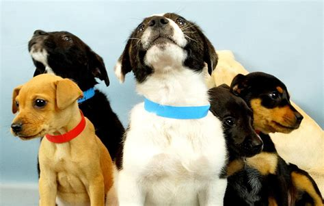 broward shelter this animal shelter offers pet delivery to offices to reduce stress and help animals